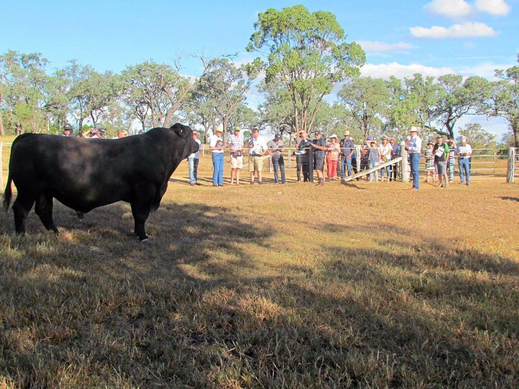 """A group of 40 Angus breeders from New Zealand are given a tour of Ascot Angus stud at """"North Toolburra"""", Warwick, by stud principal, Jim Wedge.Photo Contributed"""