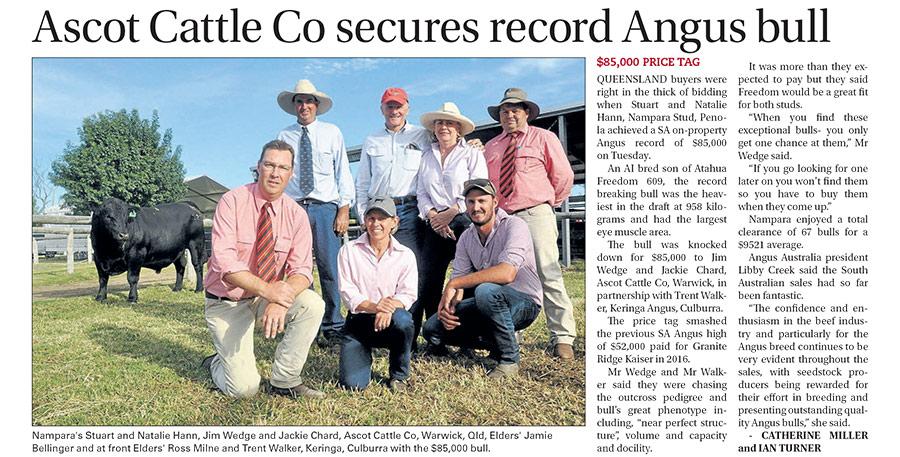 Ascot-record-Angus-Bull